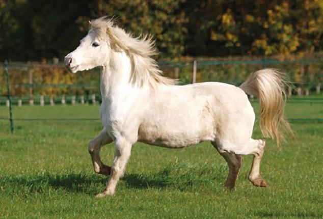 Pferdeanhänger, Pferd, Farbe: weiß, Aufnahme im Freien