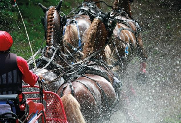 Pferdeanhänger Sirius S90 Carriage, Aufnahme von Pferden, Farbe braun