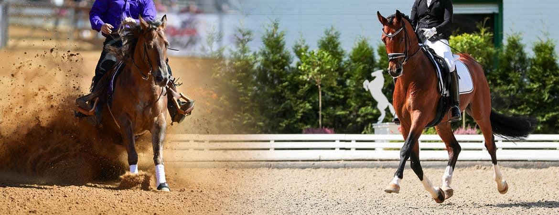 Sirius Anhänger Slider Foto mit Pferden, Aufnahme im Freien